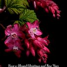 Be Blessed by Charles & Patricia   Harkins ~ Picture Oregon