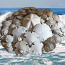 Sand Dollar Collection with the Ocean by Heather Friedman