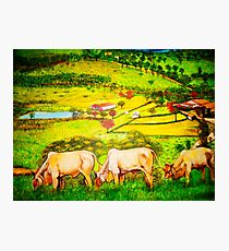 Oxen - country Photographic Print