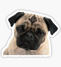 Adorable Pug Pup Sticker