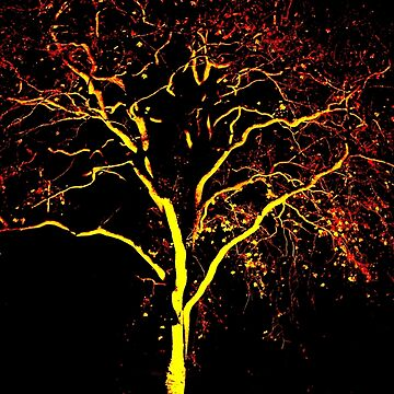 Flame tree by KateMarieLewis