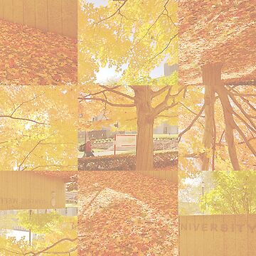 Fall Tree and Leaves Abstract Photo Collage by devonguinn