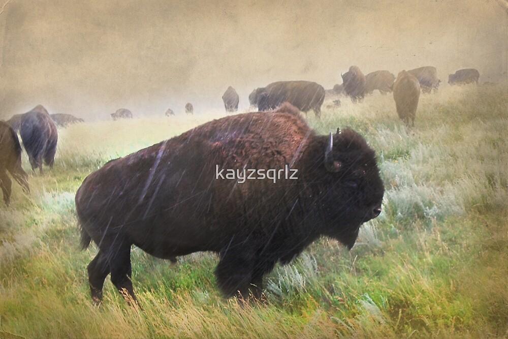 It's Raining Bison by kayzsqrlz