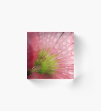 Softly Gerbera Acrylic Block
