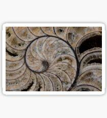 calcified nautilus Sticker