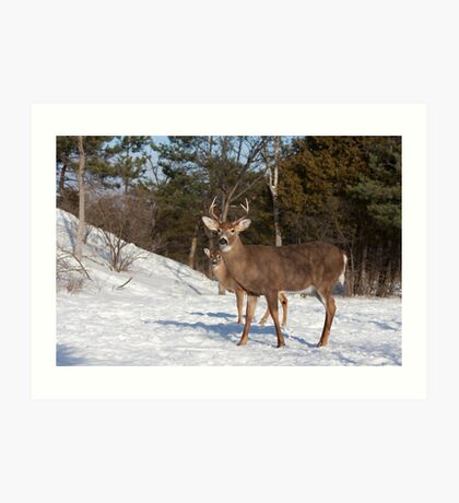 White-tailed deer buck and fawn in the winter snow Art Print