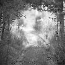 Woods #01 by Stefan Bau