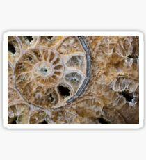 Calcified ammonite Sticker