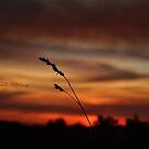 Wild Serenity by Zoe Harris