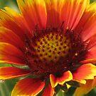 yellow orange by ANNABEL   S. ALENTON