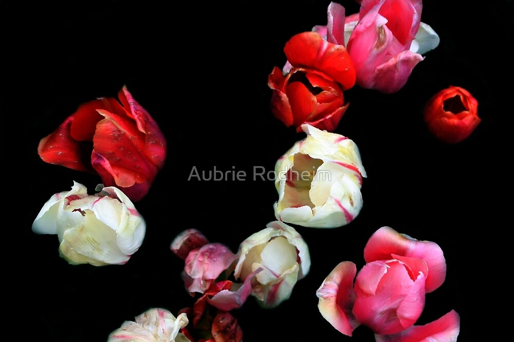 Falling Roses  by Aubrie Rodheim