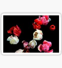 Falling Roses  Sticker