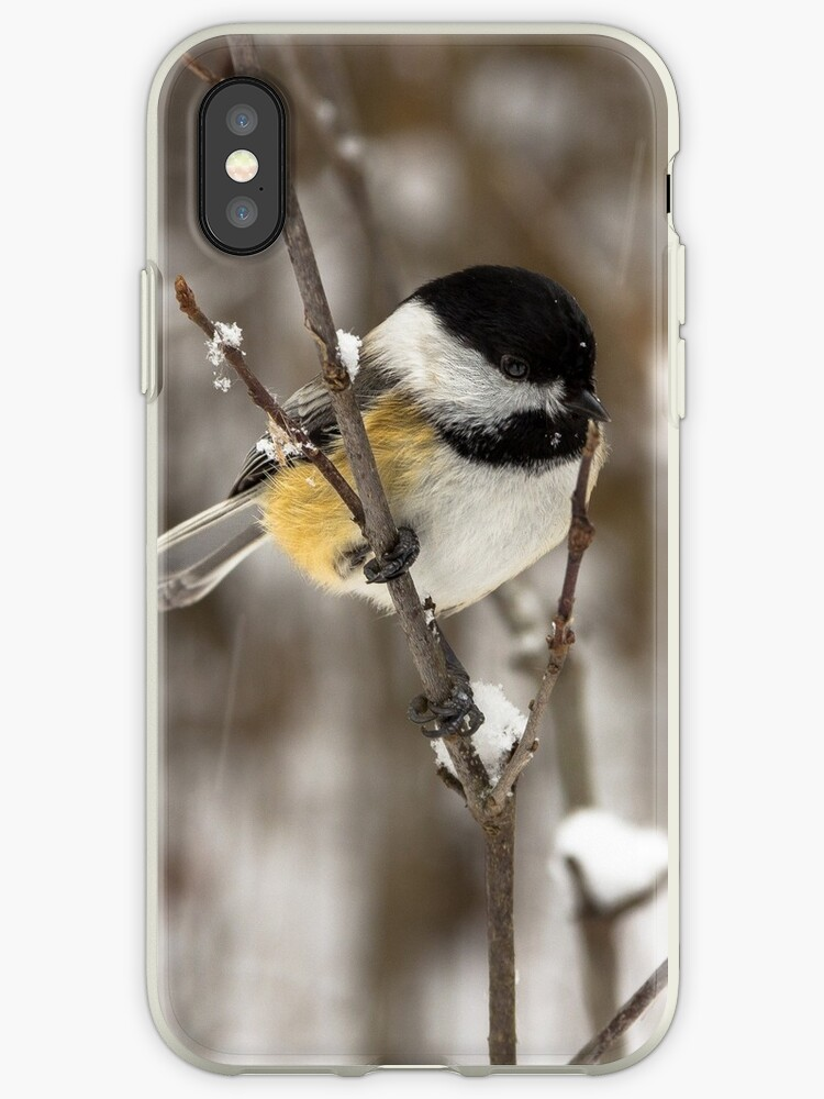 Black-capped Chickadee by LOFPHOTOGRAPHY