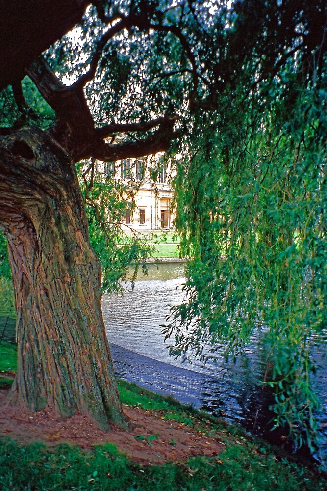 24 The Wren Library through Trees by Priscilla Turner