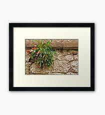 Stonewall Wonder ©  Framed Print