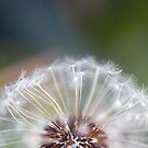 Dream a Little Dream by WendyJC