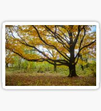 Deciduous forest in the autumn Sticker
