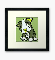 Cute Bull Terrier Puppy  Framed Print