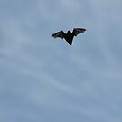 Red Bat in Flight by elasita
