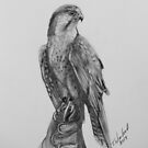 Falcon by Tricia Winwood