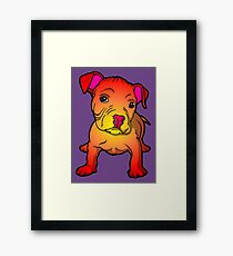 Sunset Bull Terrier Puppy  Framed Print