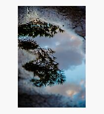 Pine in a Puddle Photographic Print