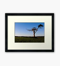 Look At Me, I'm A Tree! Framed Print