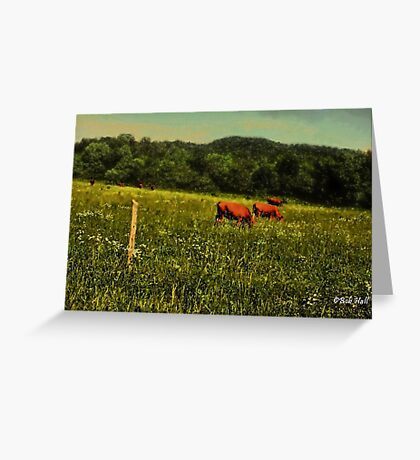 """""""Cattle Grazing """"... prints and products Greeting Card"""