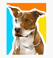 RENEE - American Pit Bull Terrier Photographic Print