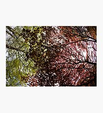 red and green makes... Photographic Print