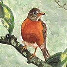 North American Robin by AngieDavies