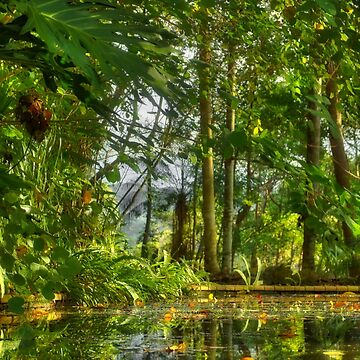 Bush pond by mswift