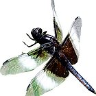 Widow Skmmer Dragonfly by Kathy Weaver