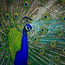 Peacock (left) by BadBehaviour