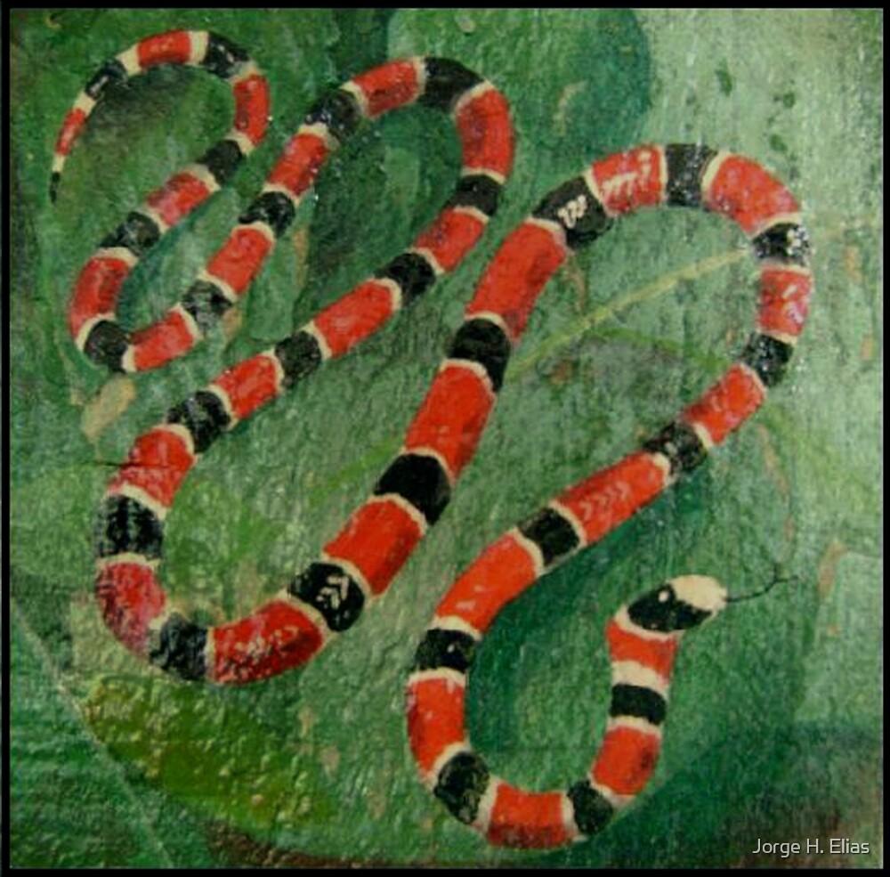 """""""Coralillo Snake """" By Jorge H. Elias"""