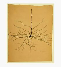 Pyramidal Cell in Cerebral Cortex, Cajal Illustration Photographic Print