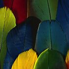 Parrot Feathers (coloured detail) by BadBehaviour