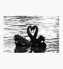 Swan sign language Photographic Print