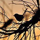 Silhouette Bird by Coralie Plozza