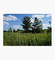 Tree on a field Photographic Print