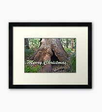 Giant Tingle Tree, Valley of Giants, WA Framed Print