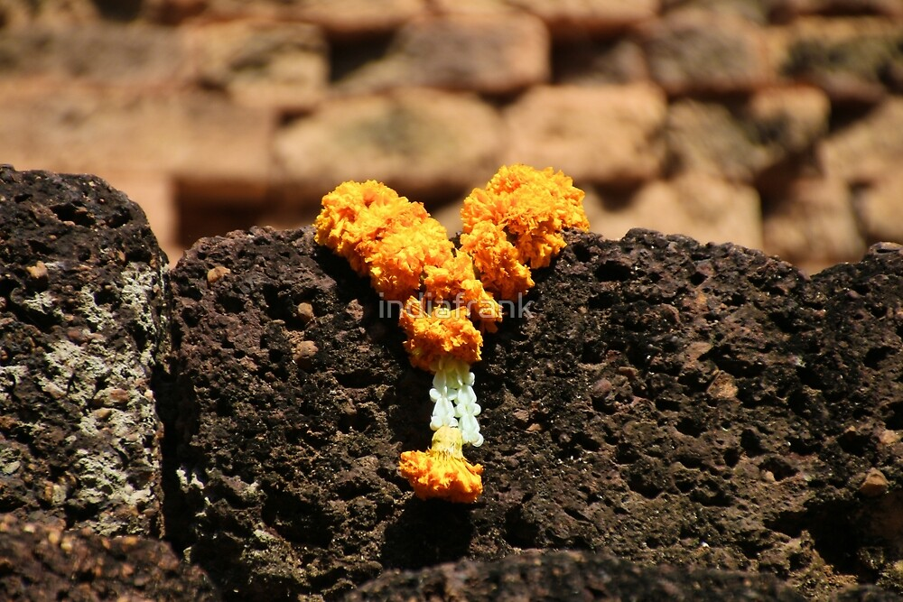 Marigolds for Buddha  by indiafrank