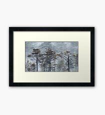 12.1.2017: Pine Trees in Blizzard Framed Print