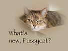 What's New Pussycat - Lily the Cat by MotherNature
