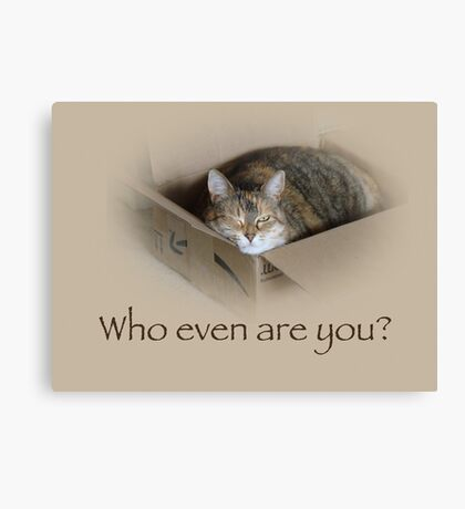 Who Even Are You - Lily the Cat Canvas Print