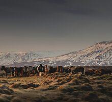 Icelandic Horses I by hraunphoto