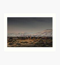 Icelandic Horses I Art Print