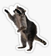 Hey, raccoon Sticker