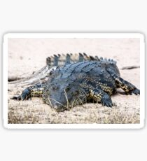 Crocodile lining in the bush, game reserve Botswana Sticker
