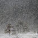 12.1.2017: Pine Tree in Blizzard III by Petri Volanen